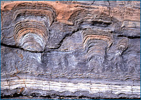fossil stromatolites, cross section, 1.8 billion year old, great slave lake, canada