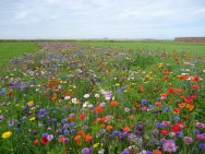 wildflower meadow, plant diversity, winterfield park, dunbar
