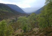 alladale, wilderness reserve, caledonian forest, scotland, paul lister, predator, wolf, bear, lynx, wildcat