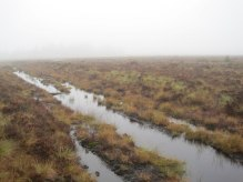 bellcrag flow, border mires, peatland, most tranquil place in england, kielder forest, northumberland