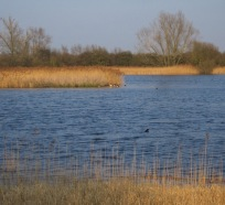 mere, shallow lake, wicken fen, cambridgeshire, national trust, undrained fens