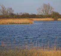 mere, shallow lake, wicken fen, cambridgeshire, national trust, undrained fens