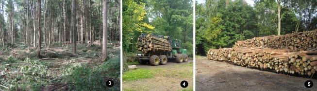 ickworth park, national trust, biomass boiler, lownde wood, timber stacks