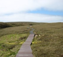 blanket bog, hermaness, boardwalk, winnaswarta dale